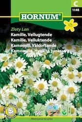 Kamomill - Zloty Lan