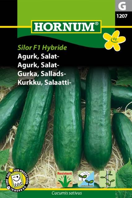 Salladsgurka - Silor F1 hybrid