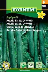 Salladsgurka - Euphya F1