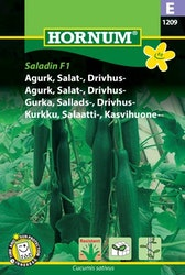 Salladsgurka - Saladin F1