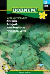 Kronärtsskocka - Gros Vert de Laon