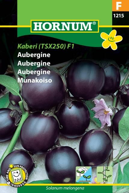 Aubergine - Kaberi (TSX250) F1