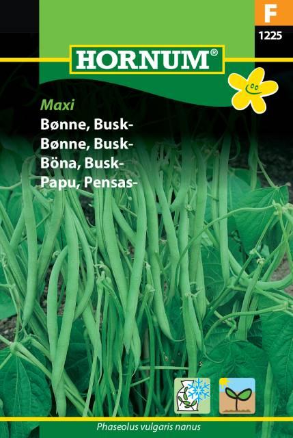 Buskböna - Maxi