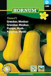 Mysk pumpa - Tiana F1