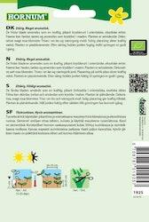 Koriander (EKO) - Hornum frø