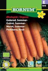 Sommar morot (EKO) - Hornum frø