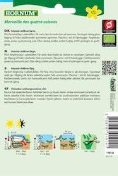 Huvud sallat (EKO) - Hornum frø