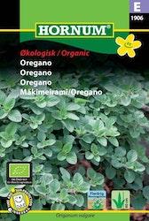 Oregano (EKO) - Hornum frø
