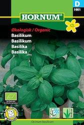Basilika (EKO) - Hornum frø
