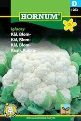 Blomkål - Igloory