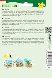 Grönkål - Halbhoher grüner Krauser