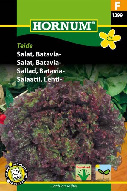 Batavia sallad - Teide