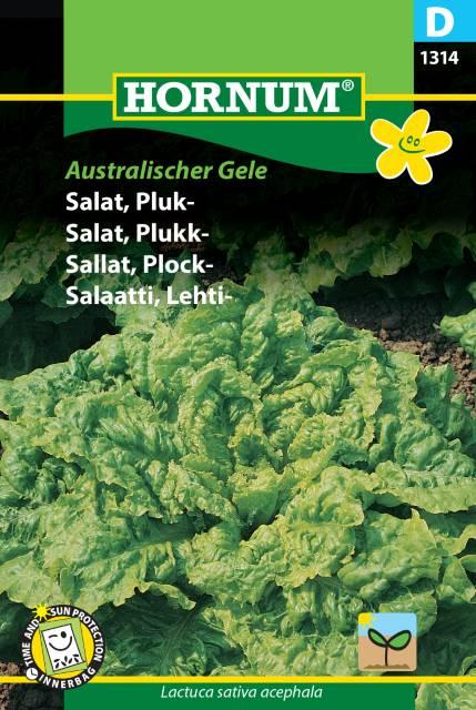 Plocksallad - Australischer Gele