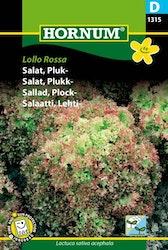 Plocksallad - Lollo Rossa
