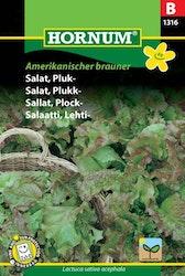Plocksallad - Amerikanischer brauner