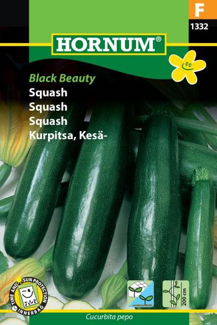 Squash - Black Beauty