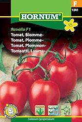 Plommontomat - Ravello F1