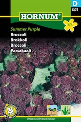 Broccoli - Summer Purple