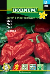 Chili - Scotch Bonnet Jamaican Red