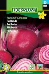 Rödbeta - Tonda di Chioggia