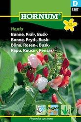 Busk Rosenböna - Hestia