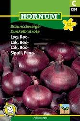 Rödlök - Braunschweiger Dunkelblutrote