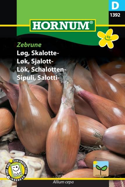 Schalottenlök -Zebrune