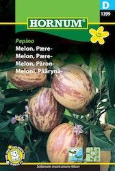 Päronmelon - Pepino