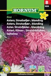 Strutsfjäder Aster mix - Boa