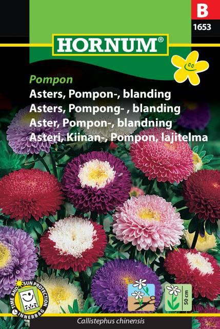 Pompon Aster mix - Pompon