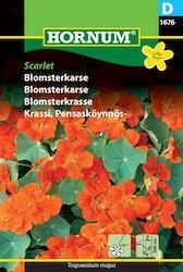 Blomsterkrasse - Scarlet