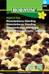 Blomsterkrasse - Night & Day
