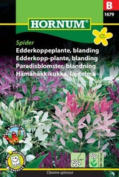 Paradisblomster mix - Spider