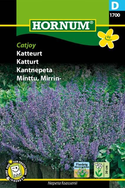 Kantnepeta - Catjoy
