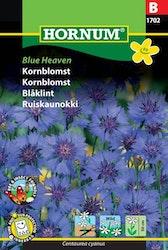 Blåklint - Blue Heaven