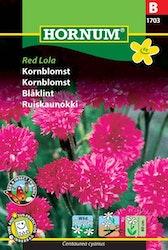 Blåklint - Red Lola