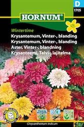 Vinter Aster mix - Wintertime