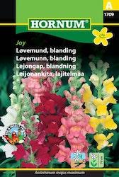 Lejongap mix - Joy