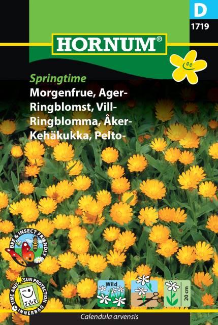 Åkerringblomma - Springtime