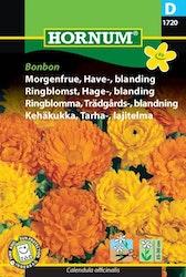 Trädgårdsringblomma - Bonbon