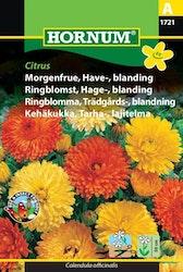 Trädgårdsringblomma - Citrus
