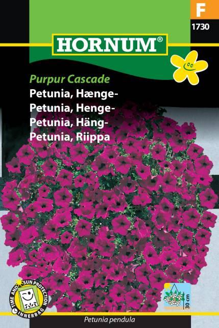 Häng Petunia - Purpur Cascade