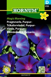 Purpurvinda - Magic Morning