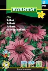 Solhatt - Clio