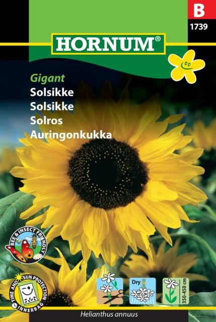 Solros - Giant