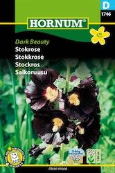 Stockros - Dark Beauty