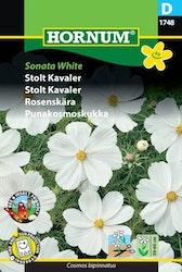 Rosenskära - Sonata White