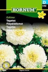 Tagetes - Eskimo