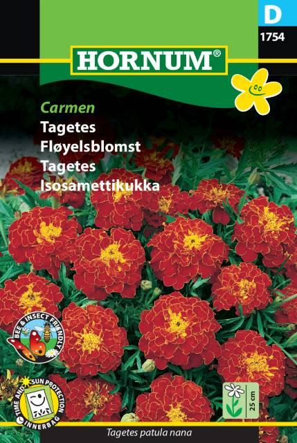 Tagetes - Carmen