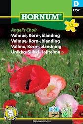 Kornvallmo - Angel's Choir